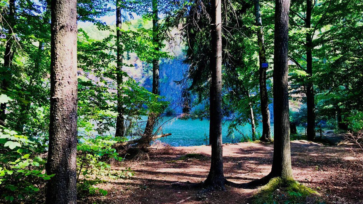 Oft befinden sich die Wildswimming-Spots in den aufgelassenen Steinbrüchen mitten im Wald